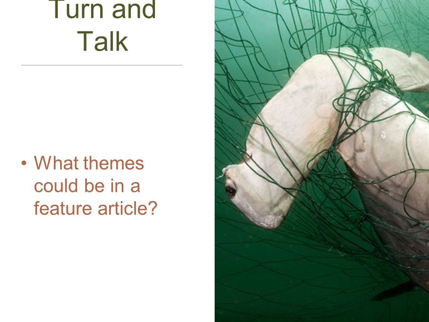 Turn and Talk What themes could be in a feature article?