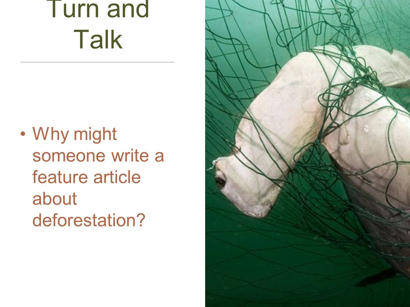 Turn and Talk Why might someone write a feature article about deforestation?
