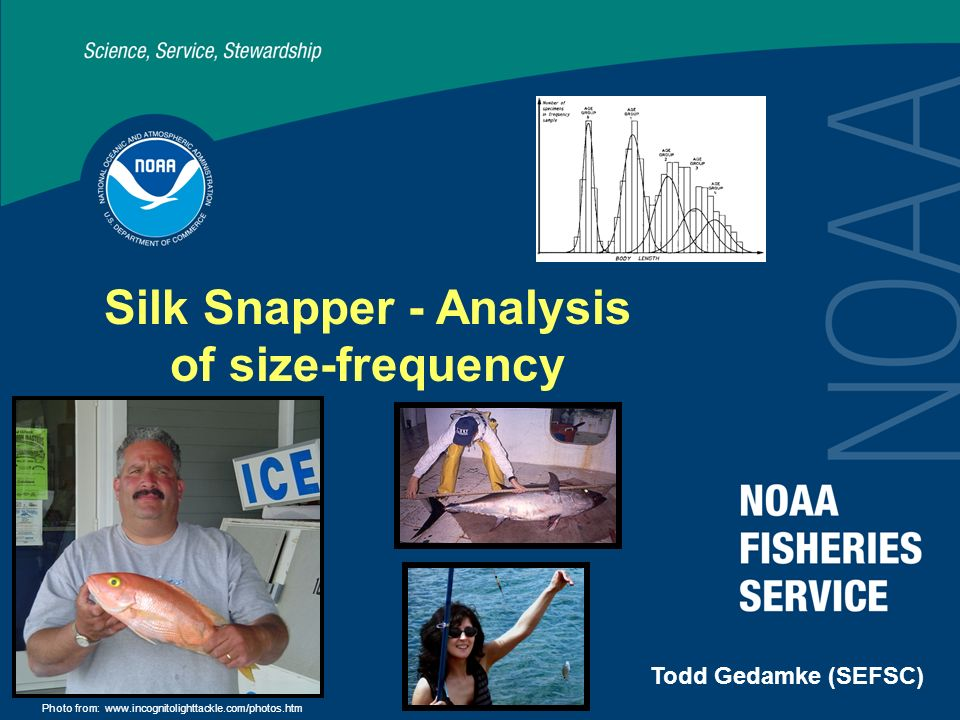 Silk Snapper - Analysis of size-frequency Todd Gedamke (SEFSC) Photo from: www.incognitolighttackle.com/photos.htm