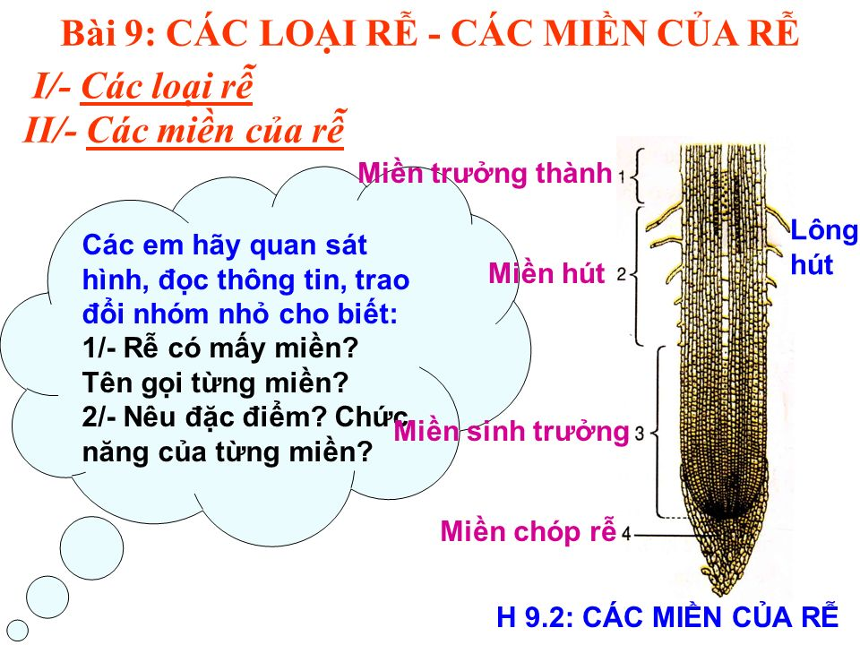 Bài 9: CÁC LOI R - CÁC MIN CA R I/- Các loi r II/- Các min ca r H 9.2: CÁC MIN CA R Các em hãy quan sát hình, đc thông tin, trao đi nhóm nh cho bit: 1/- R có my min.