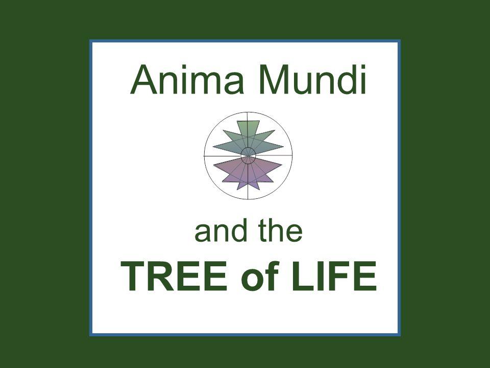 Anima Mundi and the TREE of LIFE