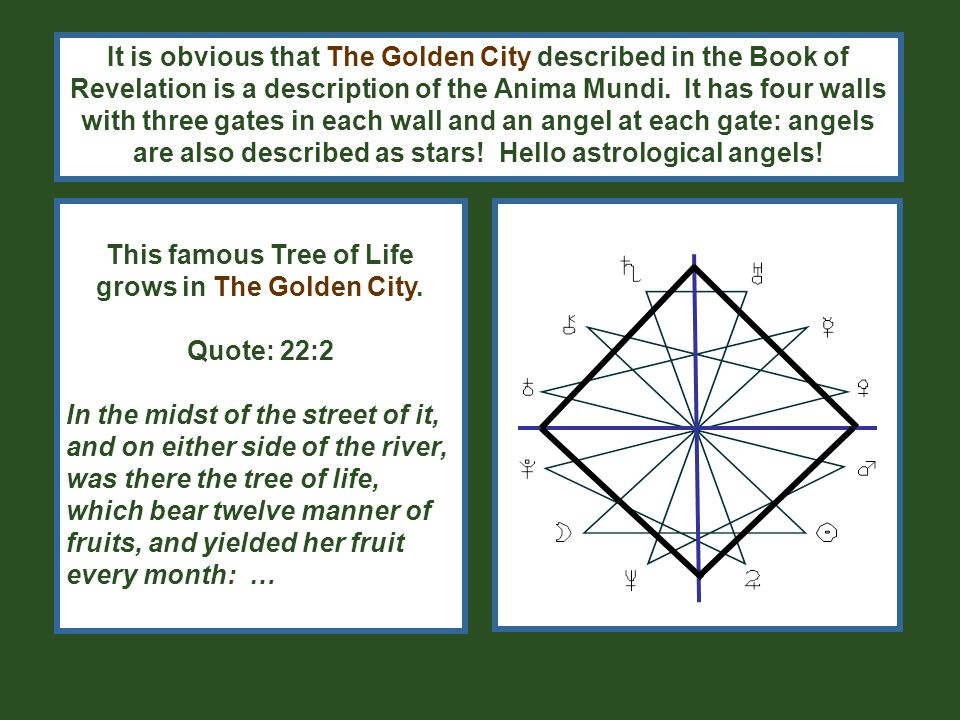 To construct a tree- model out of the arrangement of the elements on the Anima Mundi is easy-peasy.