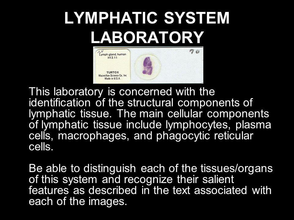 LYMPHATIC SYSTEM LABORATORY This laboratory is concerned with the identification of the structural components of lymphatic tissue. The main cellular c