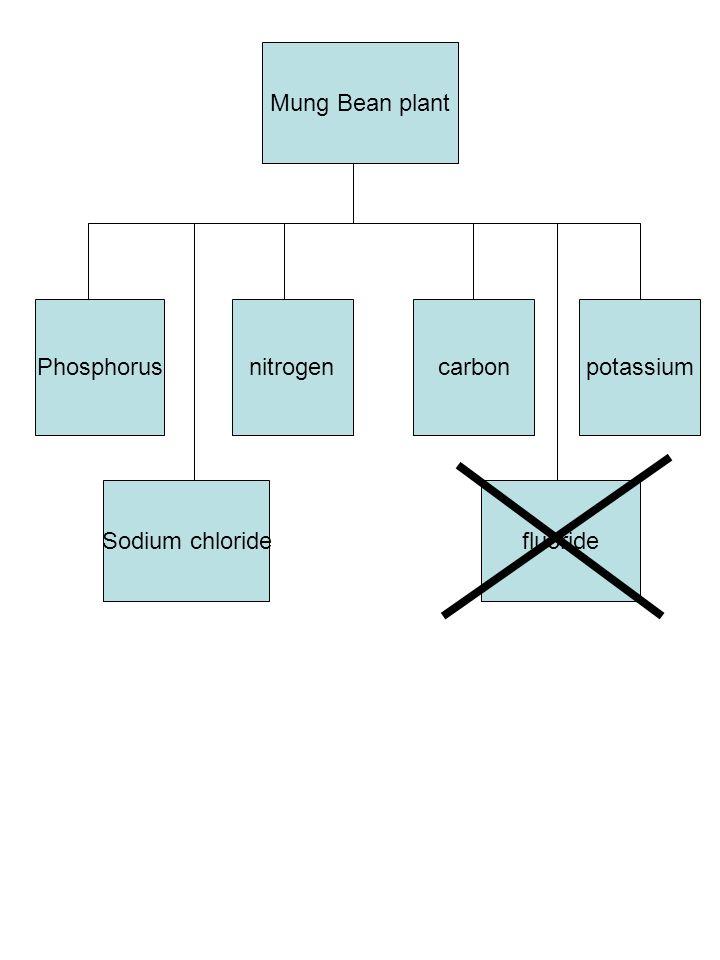 Mung Bean plant Phosphorusnitrogencarbonpotassium Sodium chloridefluoride