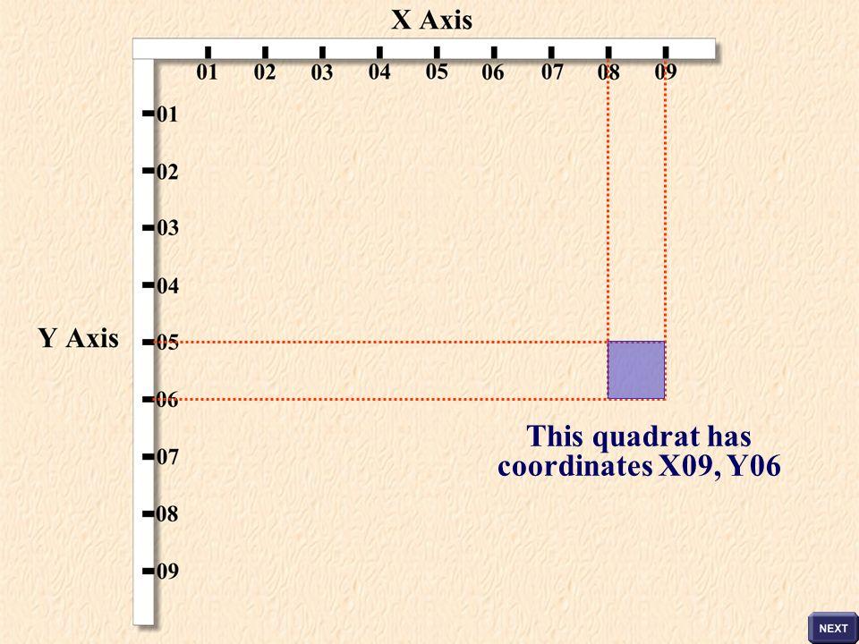 This quadrat has coordinates X09, Y06