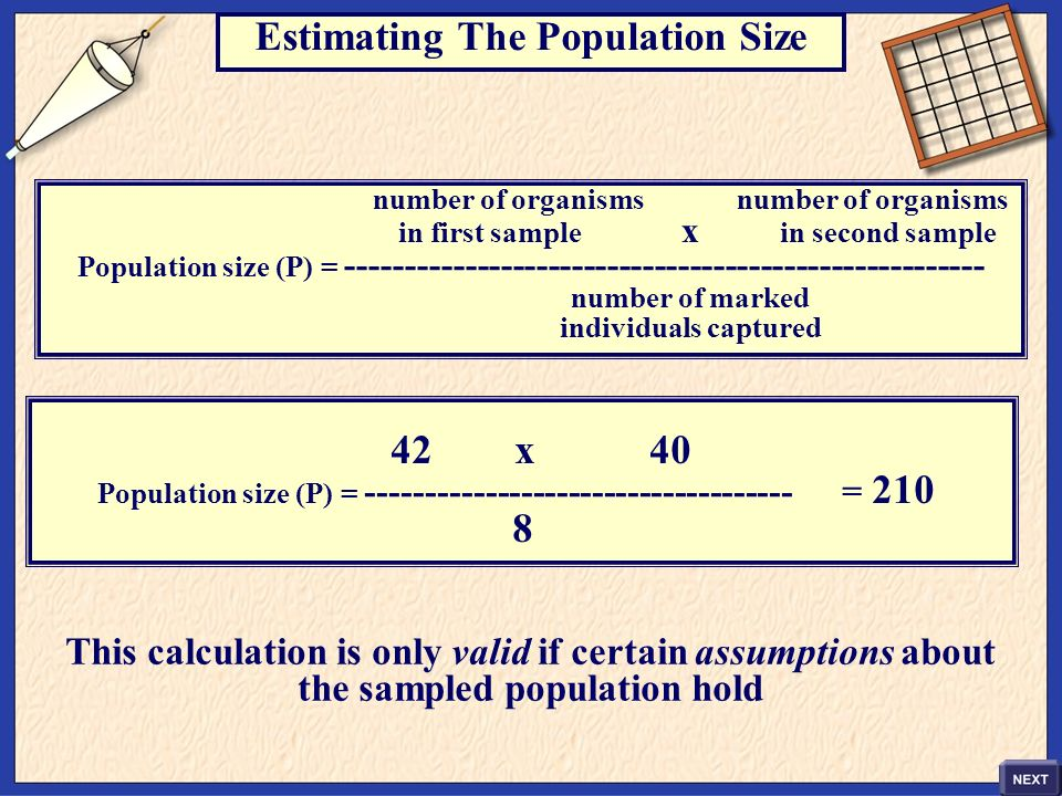 Estimating The Population Size number of organisms in first sample x in second sample Population size (P) = ------------------------------------------