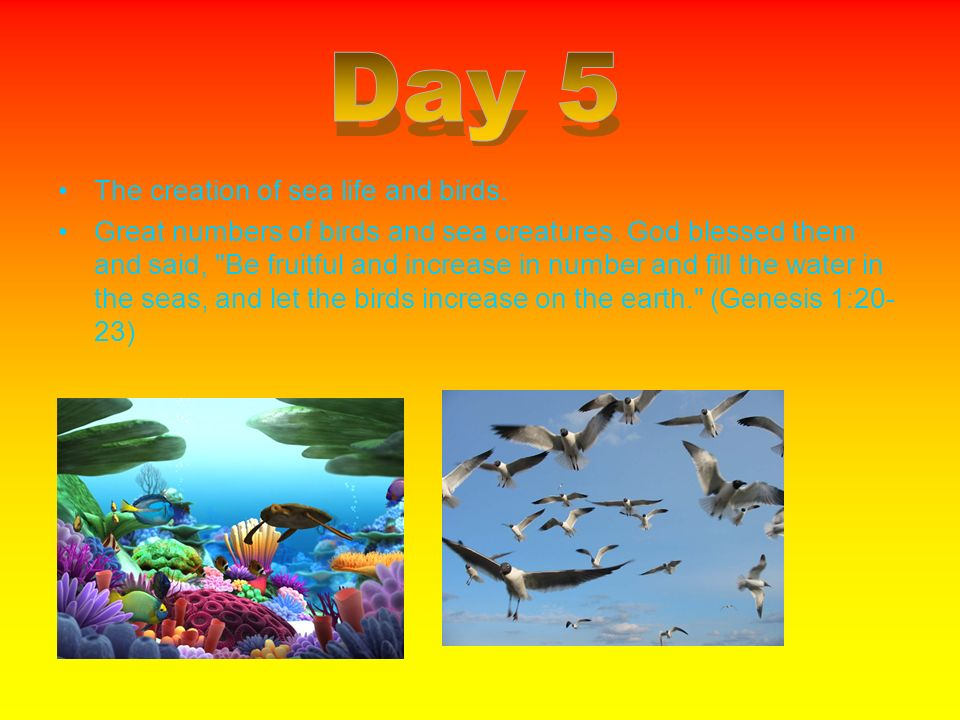The creation of sea life and birds. Great numbers of birds and sea creatures. God blessed them and said,
