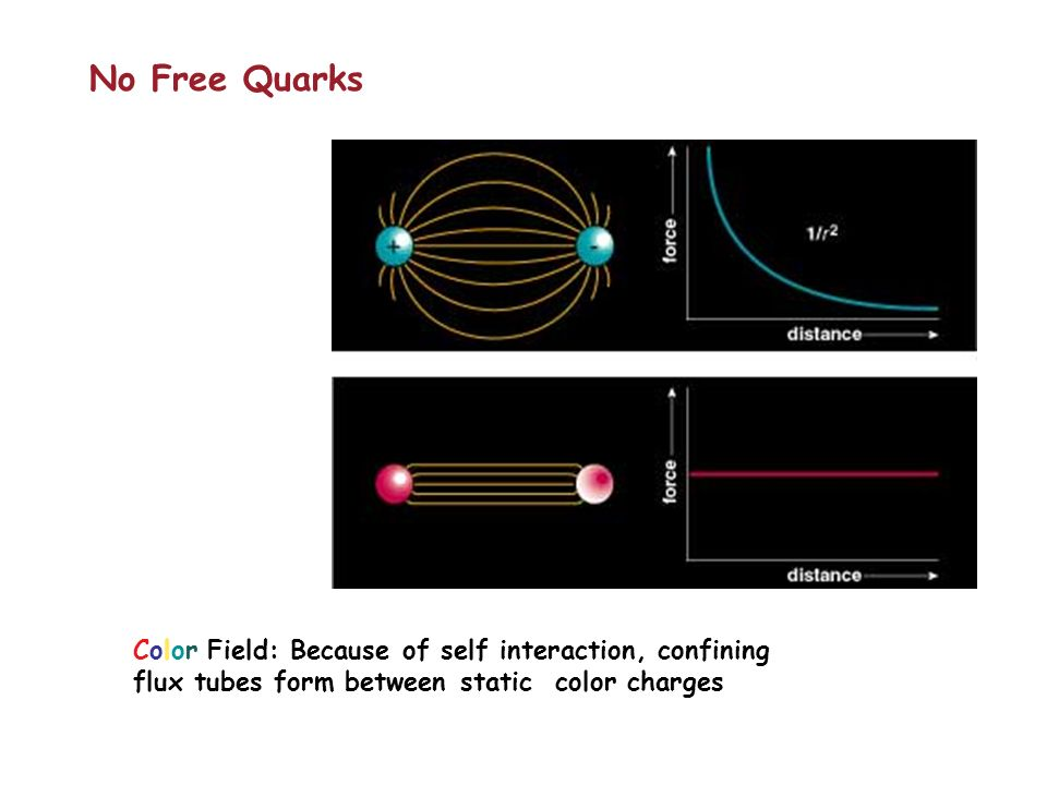 Color Field: Because of self interaction, confining flux tubes form between static color charges No Free Quarks