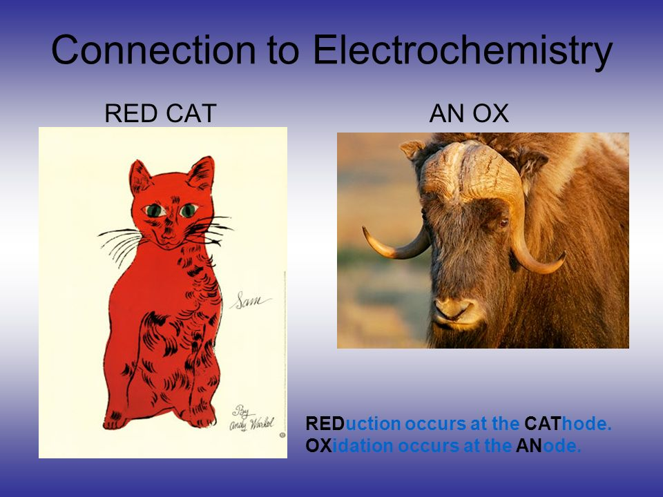 Connection to Electrochemistry RED CAT AN OX REDuction occurs at the CAThode. OXidation occurs at the ANode.