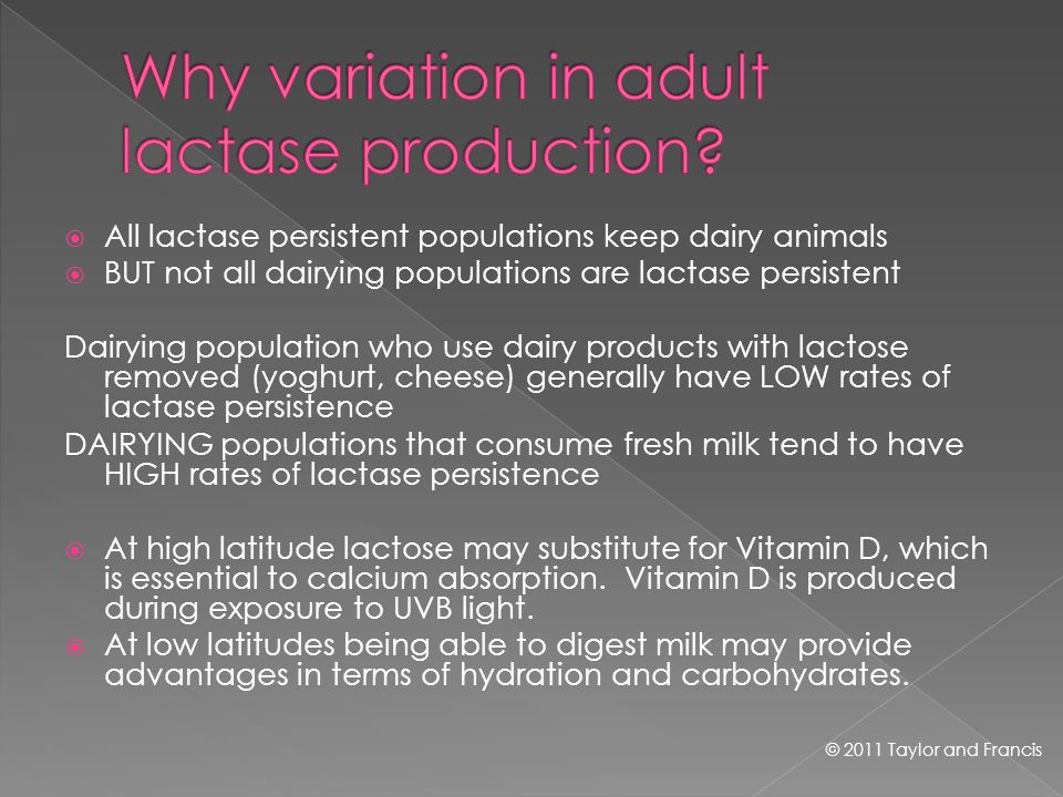 All lactase persistent populations keep dairy animals BUT not all dairying populations are lactase persistent Dairying population who use dairy products with lactose removed (yoghurt, cheese) generally have LOW rates of lactase persistence DAIRYING populations that consume fresh milk tend to have HIGH rates of lactase persistence At high latitude lactose may substitute for Vitamin D, which is essential to calcium absorption.