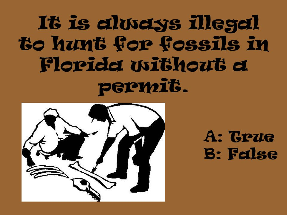It is always illegal to hunt for fossils in Florida without a permit. A: True B: False