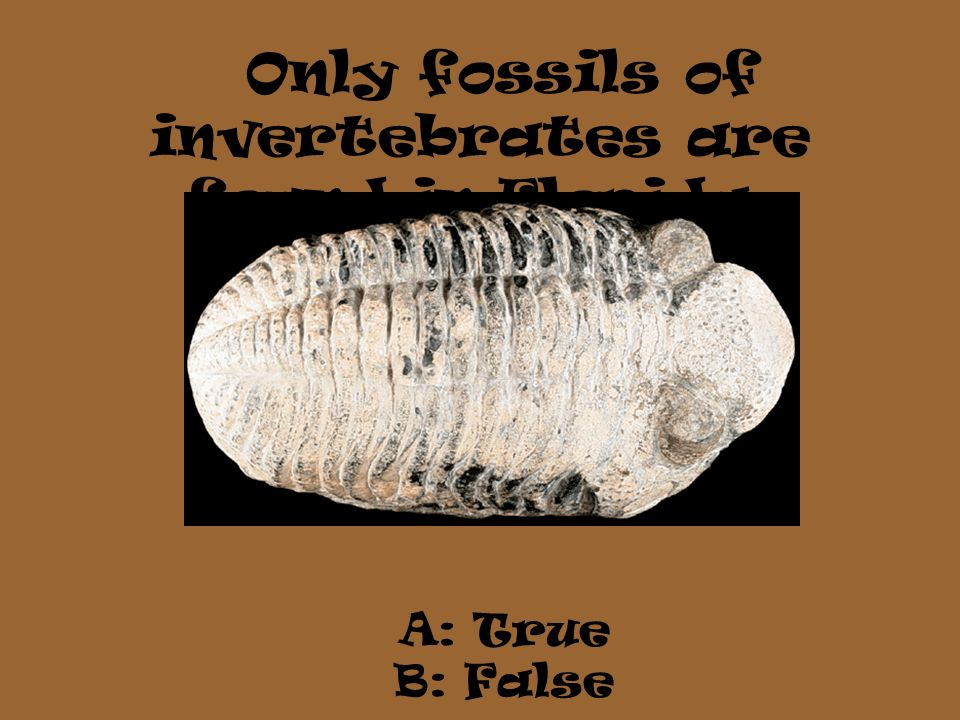 Only fossils of invertebrates are found in Florida. A: True B: False