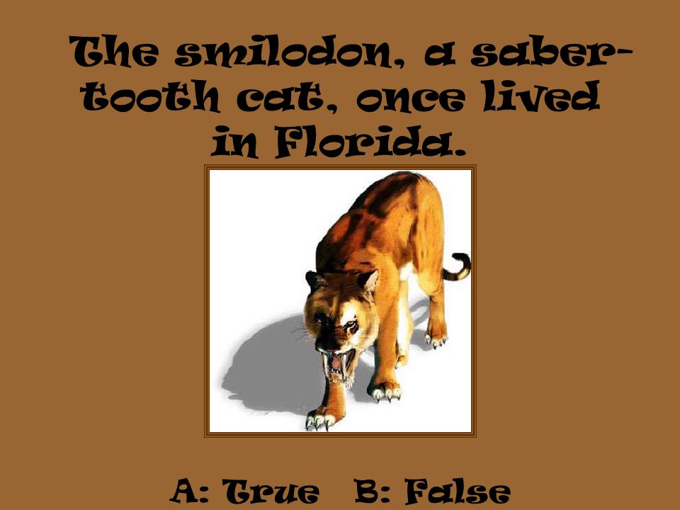 The smilodon, a saber- tooth cat, once lived in Florida. A: True B: False