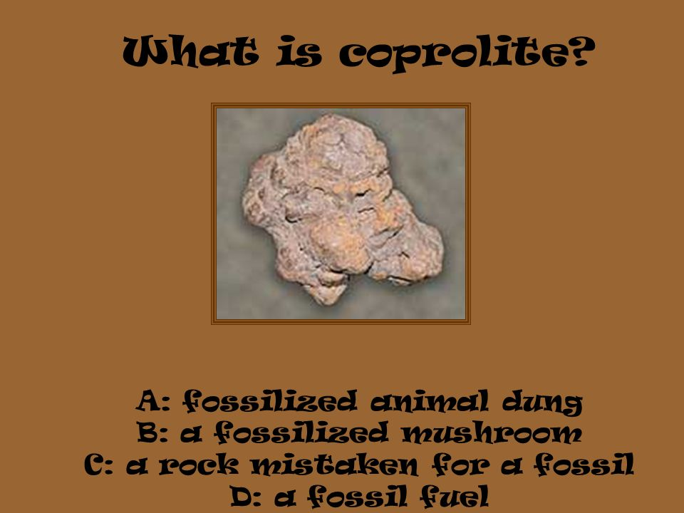 What is coprolite? A: fossilized animal dung B: a fossilized mushroom C: a rock mistaken for a fossil D: a fossil fuel