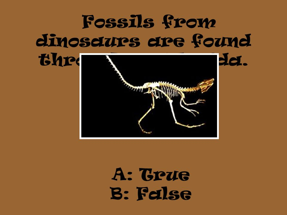 Fossils from dinosaurs are found throughout Florida. A: True B: False