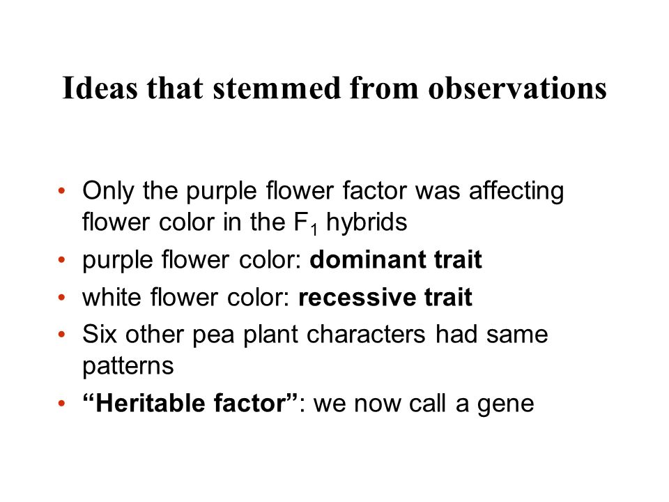 Ideas that stemmed from observations Only the purple flower factor was affecting flower color in the F 1 hybrids purple flower color: dominant trait w