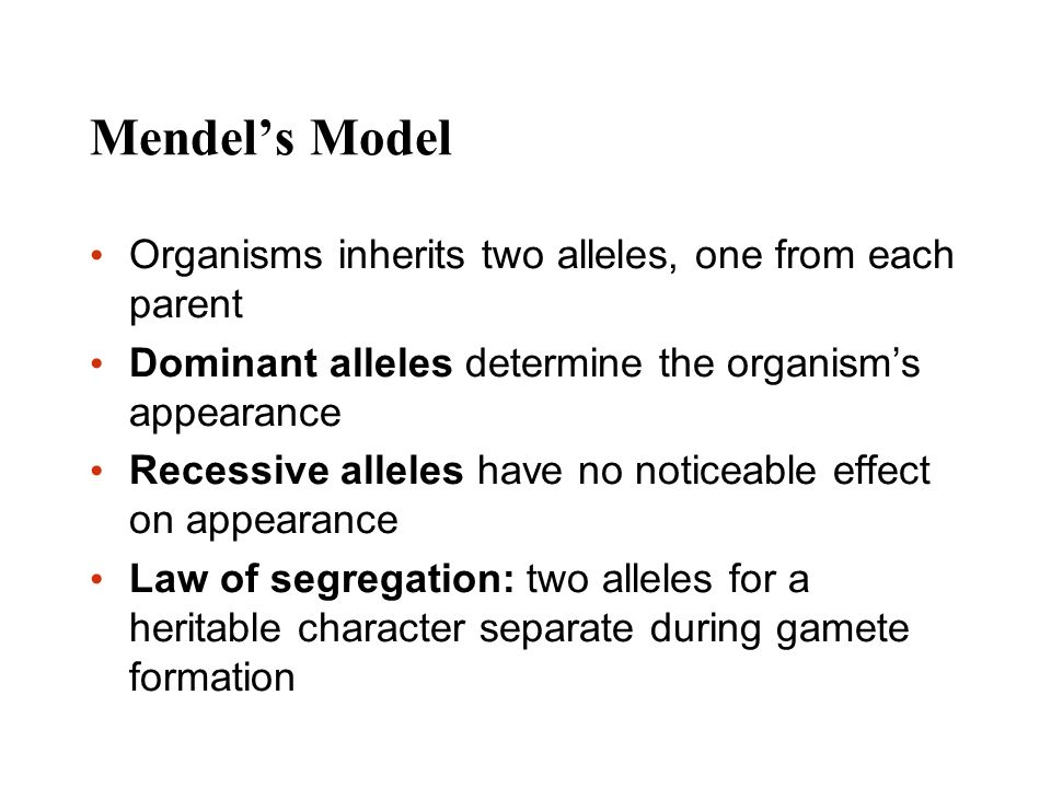 Mendels Model Organisms inherits two alleles, one from each parent Dominant alleles determine the organisms appearance Recessive alleles have no notic