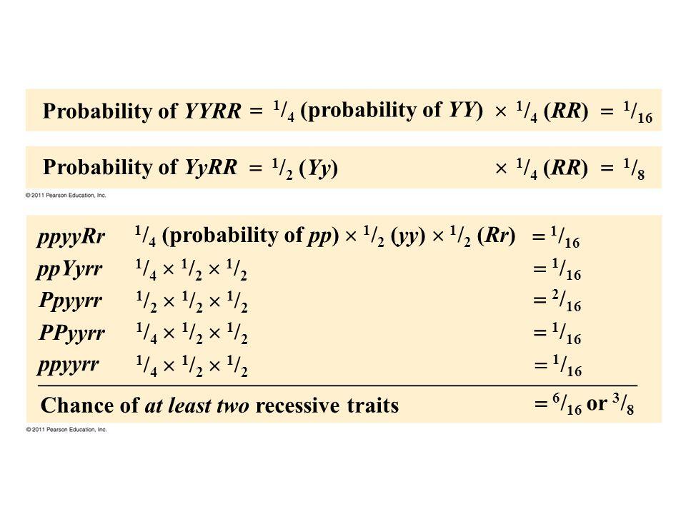 Figure 14.UN01 Probability of YYRR Probability of YyRR 1 / 4 (probability of YY) 1 / 2 (Yy) 1 / 4 (RR) 1 / 16 1/81/8 Chance of at least two recessive