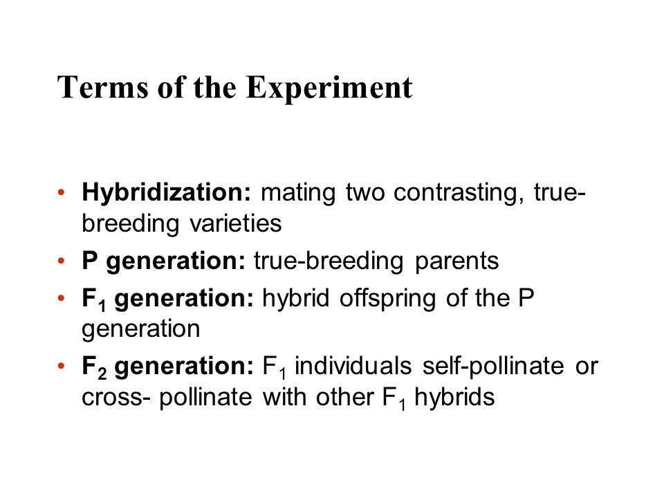 Terms of the Experiment Hybridization: mating two contrasting, true- breeding varieties P generation: true-breeding parents F 1 generation: hybrid off