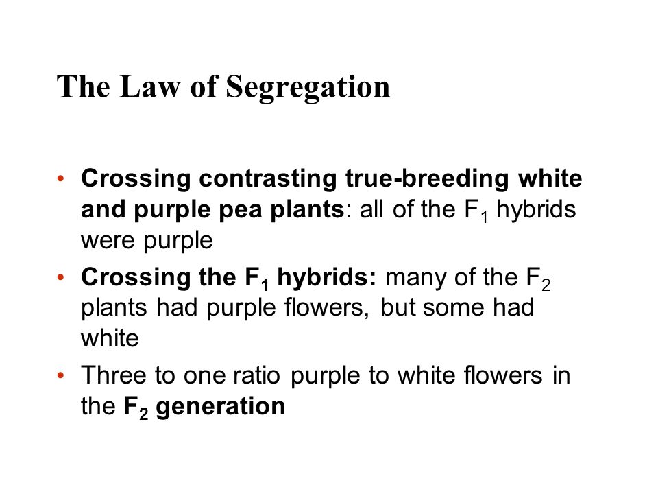 The Law of Segregation Crossing contrasting true-breeding white and purple pea plants: all of the F 1 hybrids were purple Crossing the F 1 hybrids: ma