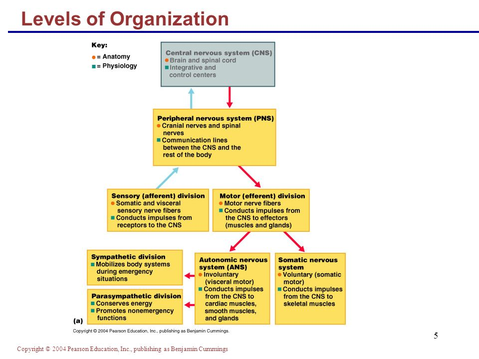 Copyright © 2004 Pearson Education, Inc., publishing as Benjamin Cummings 5 Levels of Organization