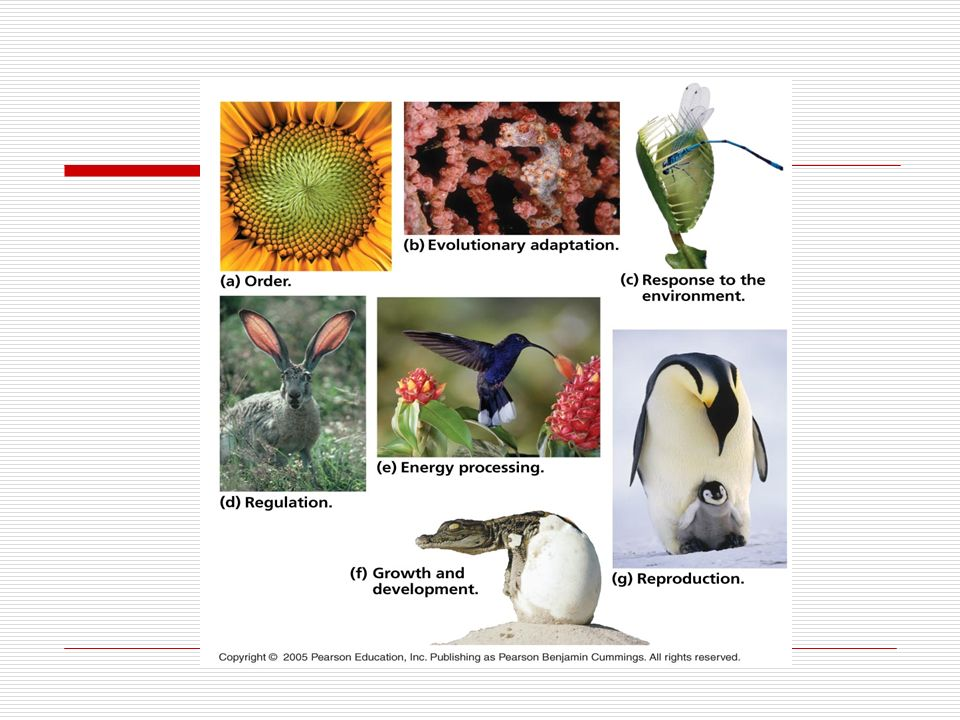 Concept 1.1: Biologists explore life from the microscopic to the global scale The study of life extends from molecules and cells to the entire living planet Biological organization is based on a hierarchy of structural levels