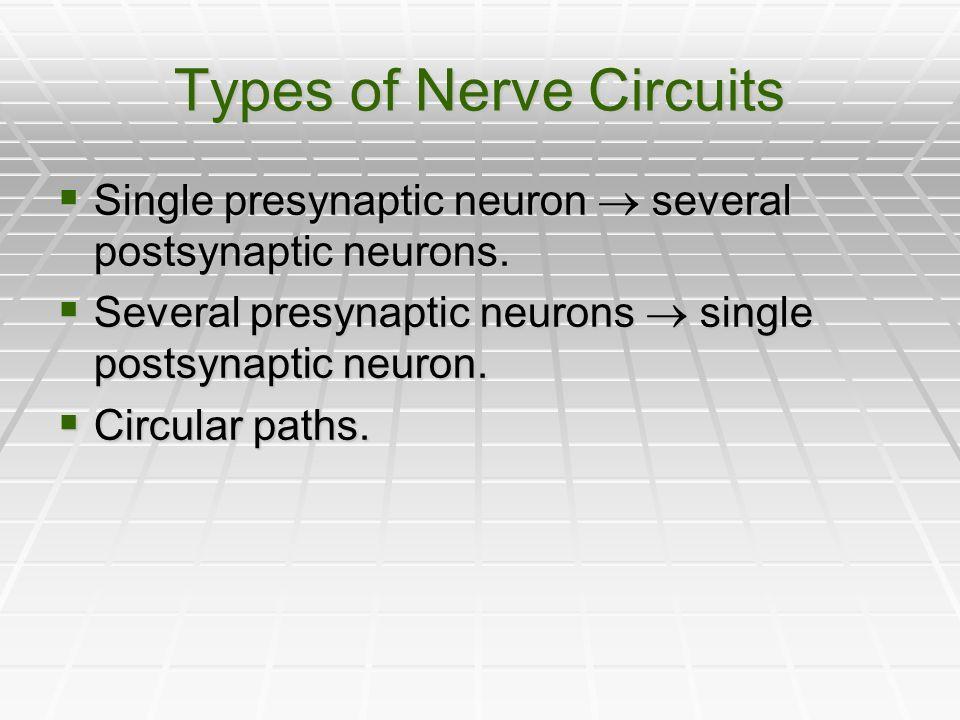 Types of Nerve Circuits Single presynaptic neuron several postsynaptic neurons. Single presynaptic neuron several postsynaptic neurons. Several presyn