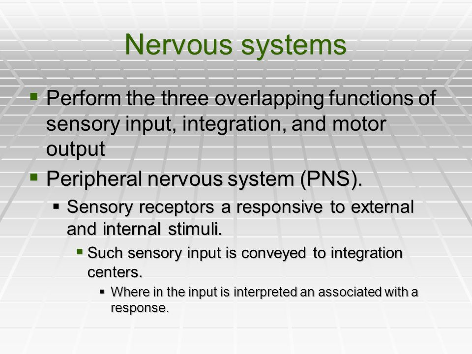 Nervous systems Perform the three overlapping functions of sensory input, integration, and motor output Perform the three overlapping functions of sen