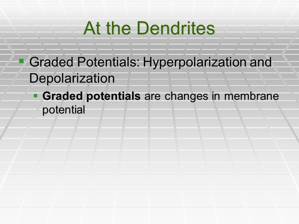 At the Dendrites Graded Potentials: Hyperpolarization and Depolarization Graded Potentials: Hyperpolarization and Depolarization Graded potentials are