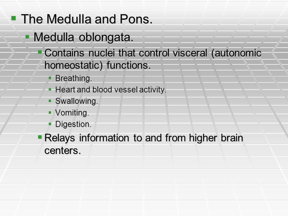 The Medulla and Pons. The Medulla and Pons. Medulla oblongata. Medulla oblongata. Contains nuclei that control visceral (autonomic homeostatic) functi