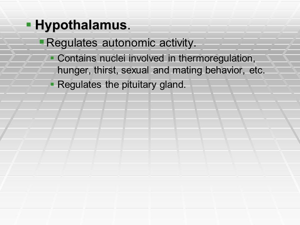 Hypothalamus. Hypothalamus. Regulates autonomic activity. Regulates autonomic activity. Contains nuclei involved in thermoregulation, hunger, thirst,