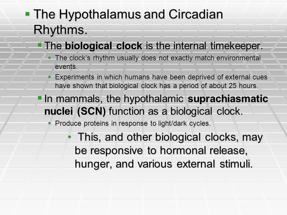 The Hypothalamus and Circadian Rhythms. The Hypothalamus and Circadian Rhythms. The biological clock is the internal timekeeper. The biological clock