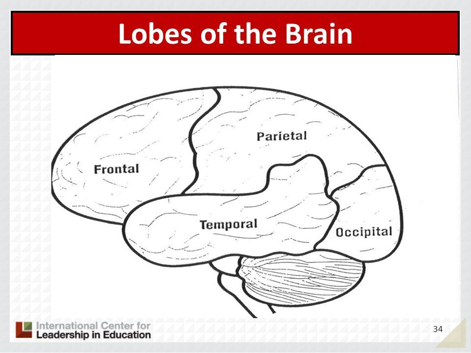 Lobes of the Brain 34