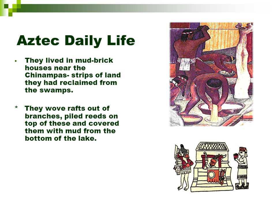 Aztec farming/hunting The Aztecs planted corn, tomatoes, chili peppers, and squash. The Aztecs didnt use plows or wheel driven vehicles at all.