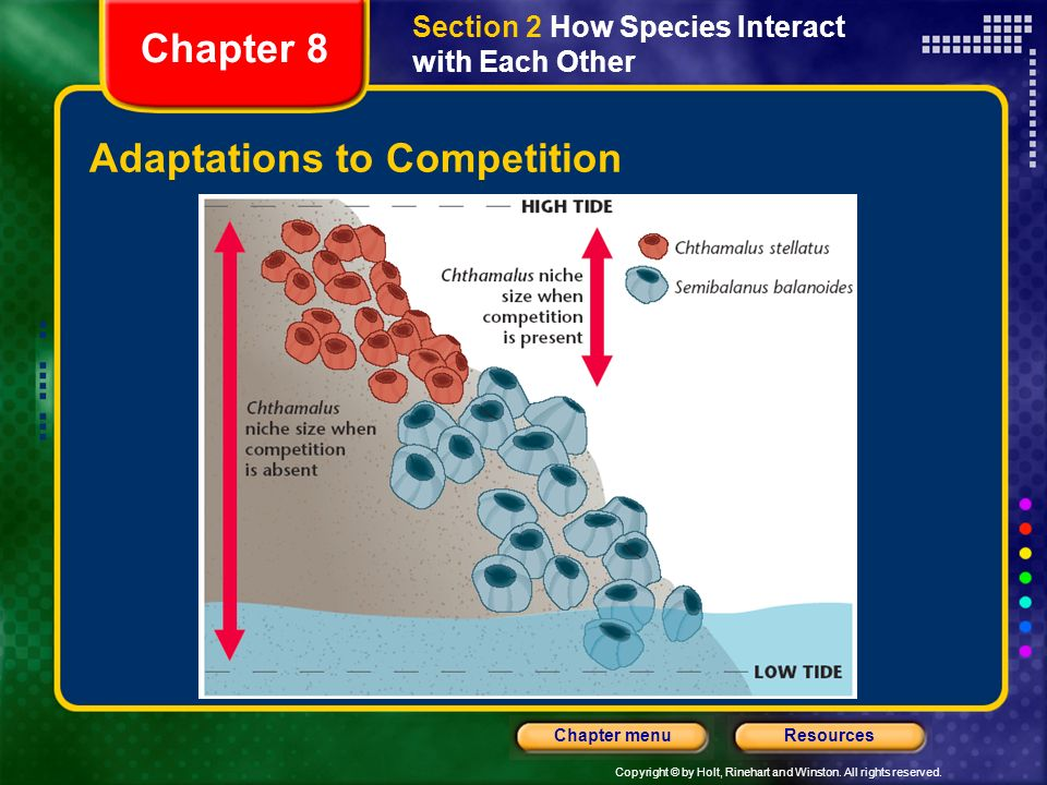 Copyright © by Holt, Rinehart and Winston. All rights reserved. ResourcesChapter menu Adaptations to Competition Chapter 8 Section 2 How Species Inter