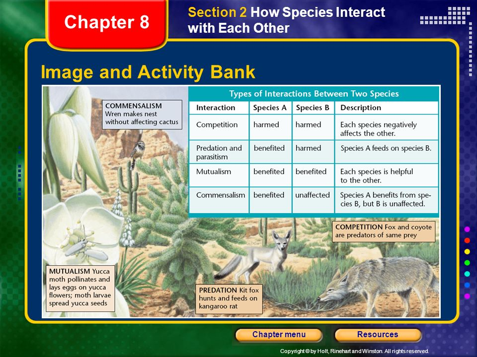 Copyright © by Holt, Rinehart and Winston. All rights reserved. ResourcesChapter menu Image and Activity Bank Section 2 How Species Interact with Each