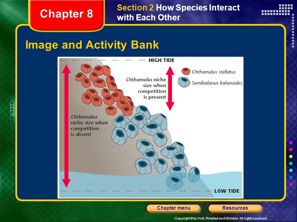 Copyright © by Holt, Rinehart and Winston. All rights reserved. ResourcesChapter menu Image and Activity Bank Chapter 8 Section 2 How Species Interact