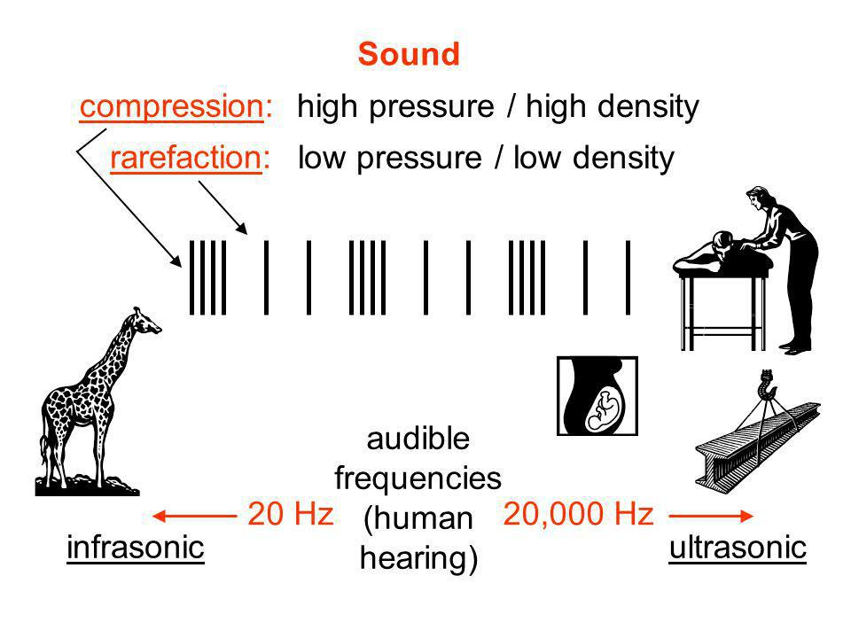 Sound compression: rarefaction: 20 Hz20,000 Hz high pressure / high density low pressure / low density audible frequencies (human hearing) infrasonicu