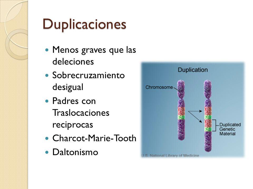 Duplicaciones Menos graves que las deleciones Sobrecruzamiento desigual Padres con Traslocaciones reciprocas Charcot-Marie-Tooth Daltonismo