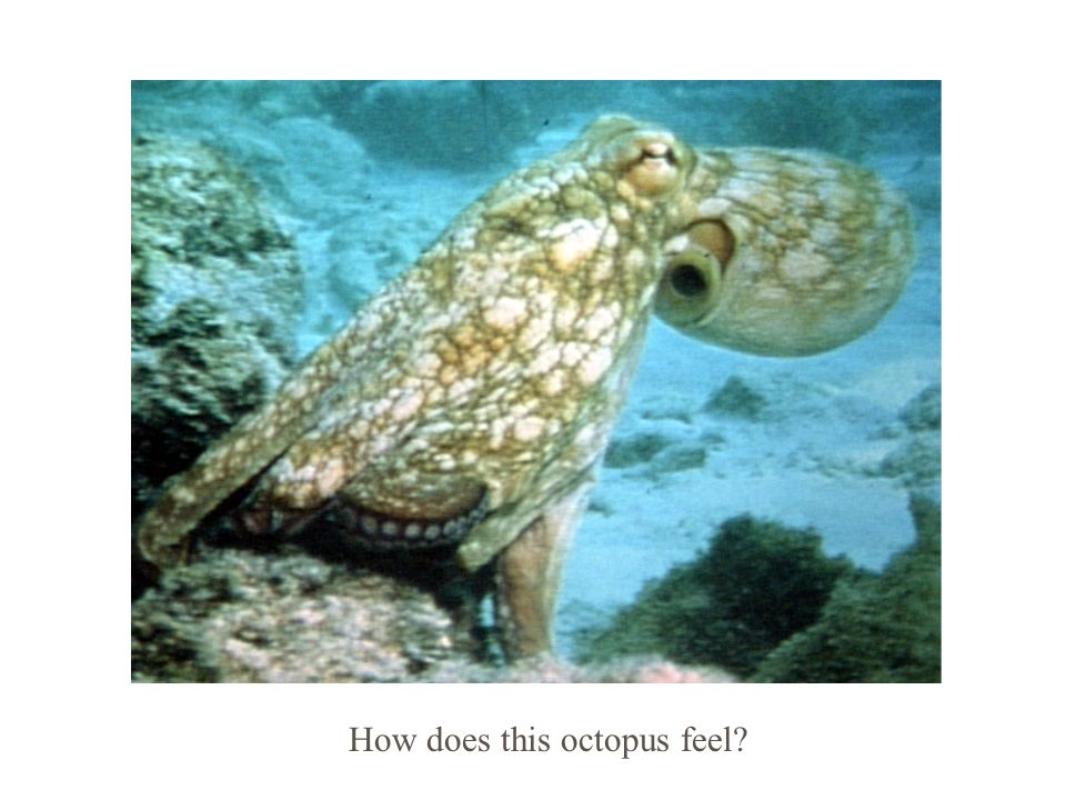 How does this octopus feel?