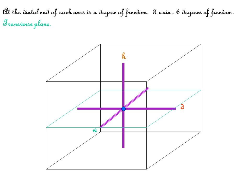 h w d At the distal end of each axis is a degree of freedom. 3 axis = 6 degrees of freedom. Transverse plane.