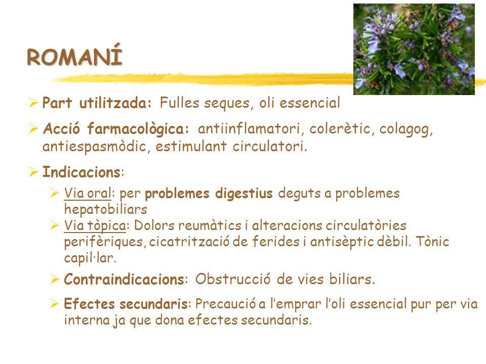 ROMANÍ Part utilitzada: Fulles seques, oli essencial Acció farmacològica: antiinflamatori, colerètic, colagog, antiespasmòdic, estimulant circulatori.