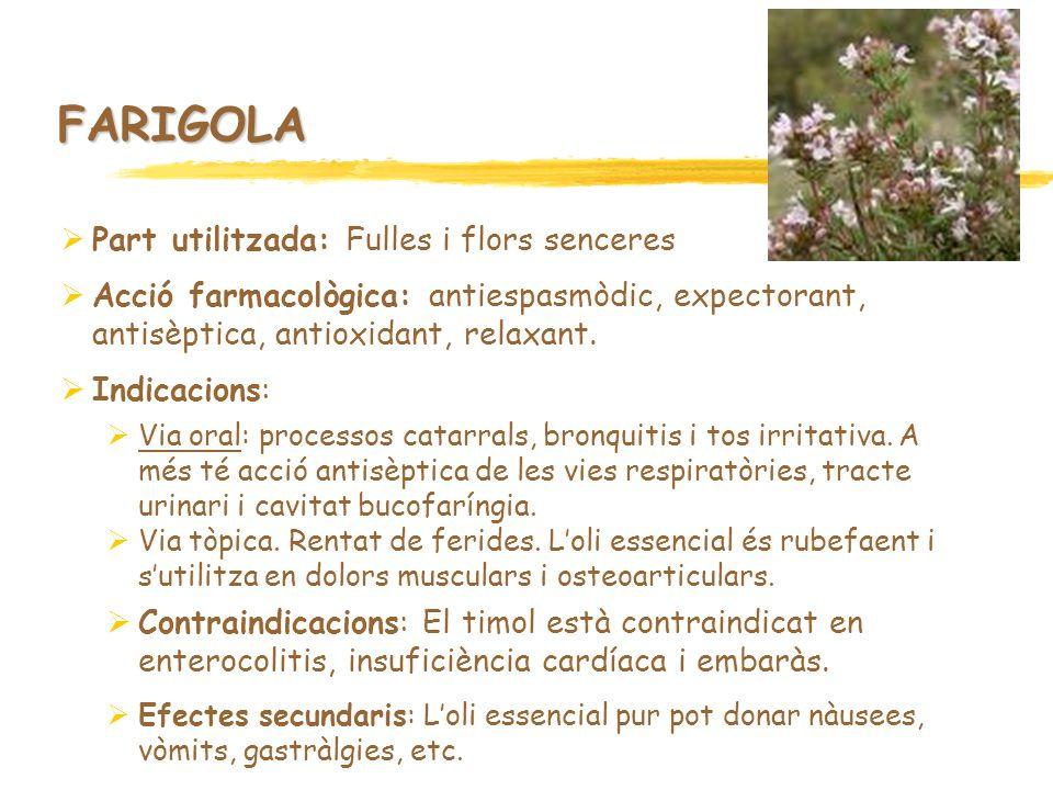 FARIGOLA Part utilitzada: Fulles i flors senceres Acció farmacològica: antiespasmòdic, expectorant, antisèptica, antioxidant, relaxant. Indicacions: V