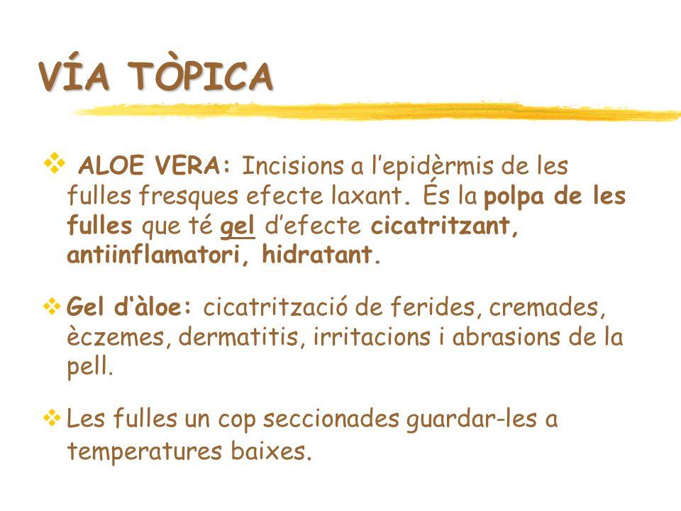 VÍA TÒPICA ALOE VERA: Incisions a lepidèrmis de les fulles fresques efecte laxant. És la polpa de les fulles que té gel defecte cicatritzant, antiinfl