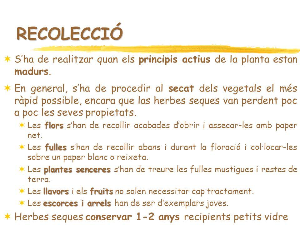 RECOLECCIÓ Sha de realitzar quan els principis actius de la planta estan madurs. En general, sha de procedir al secat dels vegetals el més ràpid possi