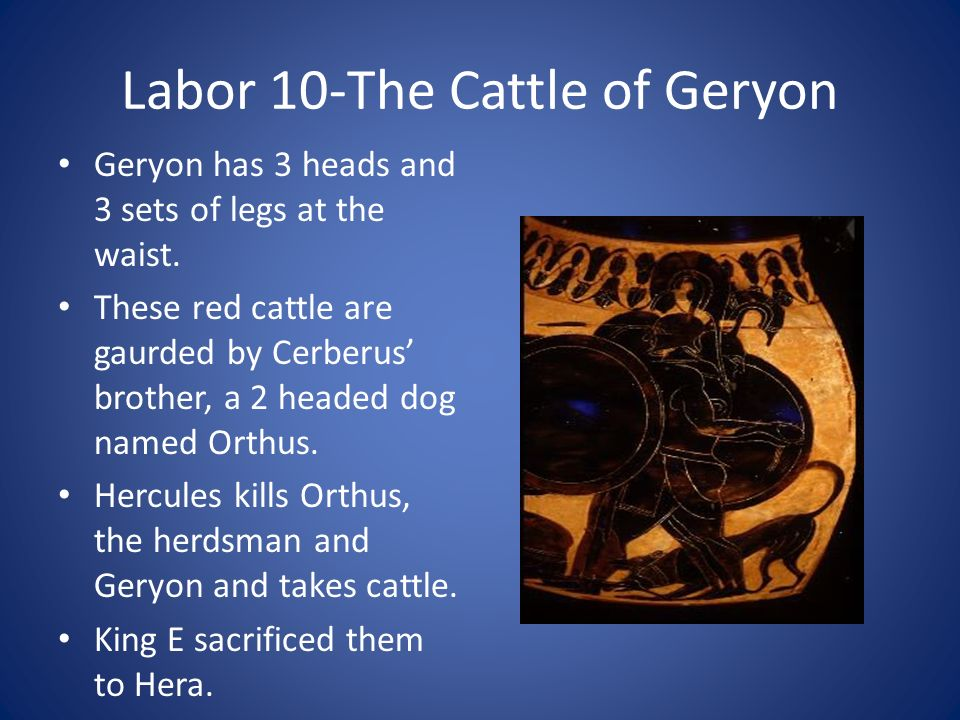 Labor 10-The Cattle of Geryon Geryon has 3 heads and 3 sets of legs at the waist. These red cattle are gaurded by Cerberus brother, a 2 headed dog nam