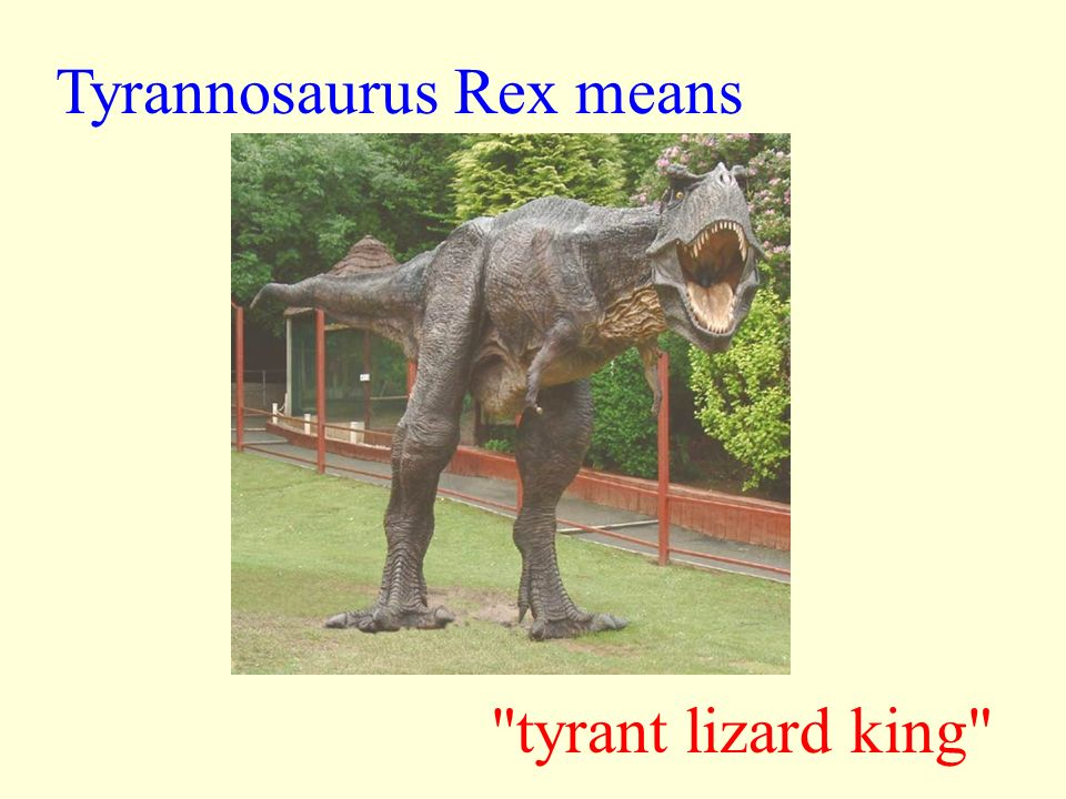 T-Rex Facts and Myths T-Rex was one of the smartest dinosaurs. T-Rex was not the smartest of all the dinosaurs. T-Rex's brain was larger than the huma