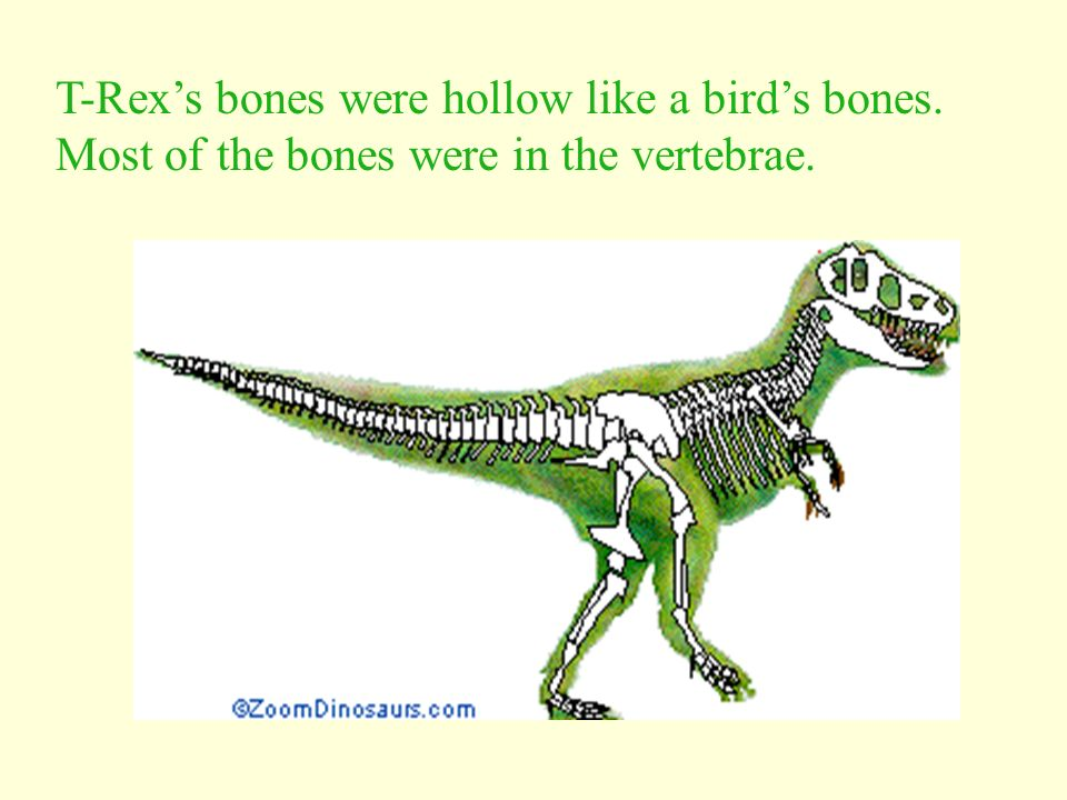 What Was Tyrannosaurus Rex? T-Rex was a huge meat-eating dinosaur. A meat-eater is called a carnivore. It had pointed teeth to rip meat.