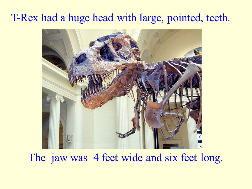 How Big Was the T- Rex? Tyrannosaurus Rex was one of the biggest of the meat-eating dinosaurs. They were 40 ft long. They were between 15 to 20 feet i