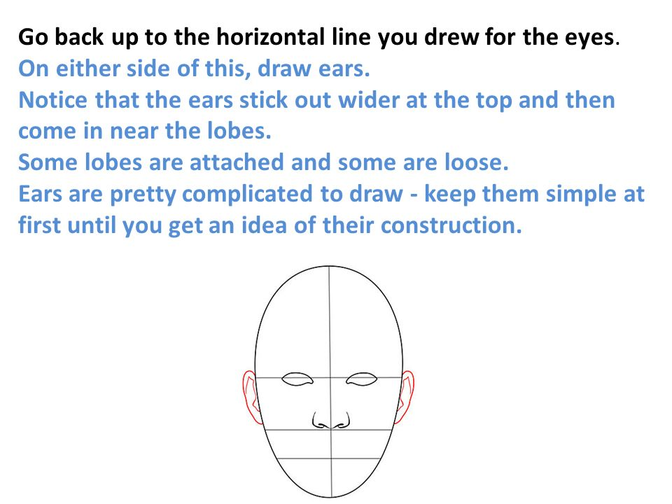 Go back up to the horizontal line you drew for the eyes.
